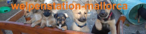 www.welpenstation-mallorca.com